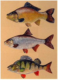 fish paintings by Richard J Willett